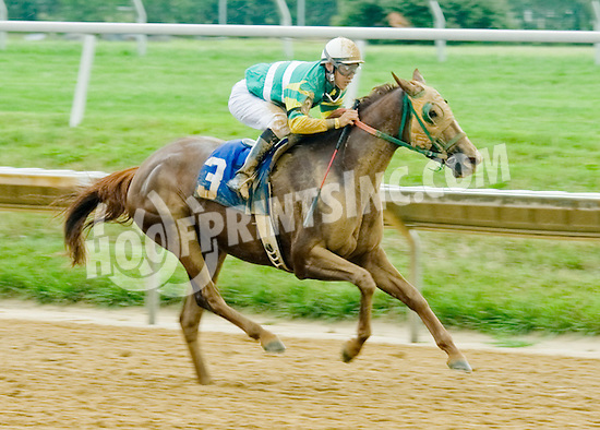 Prima Dee winning at Delaware Park on 8/1/12