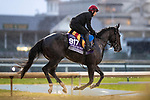 November 1, 2018: So Perfect, trained by Aidan P. O'Brien, exercises in preparation for the Breeders' Cup Juvenile Turf Sprint at Churchill Downs on November 1, 2018 in Louisville, Kentucky. Alex Evers/Eclipse Sportswire/CSM