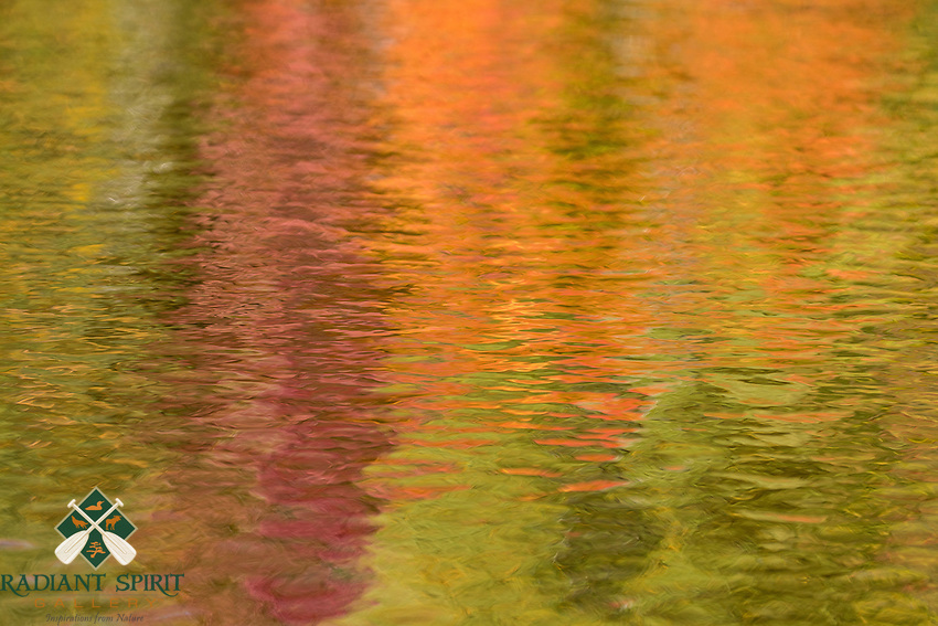 &quot;Fall Color Abstracts IV&quot;<br />