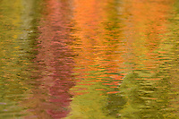 """Fall Color Abstracts IV""<br />