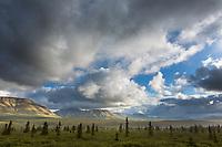 Denali National Park and Preserve, Alaska.