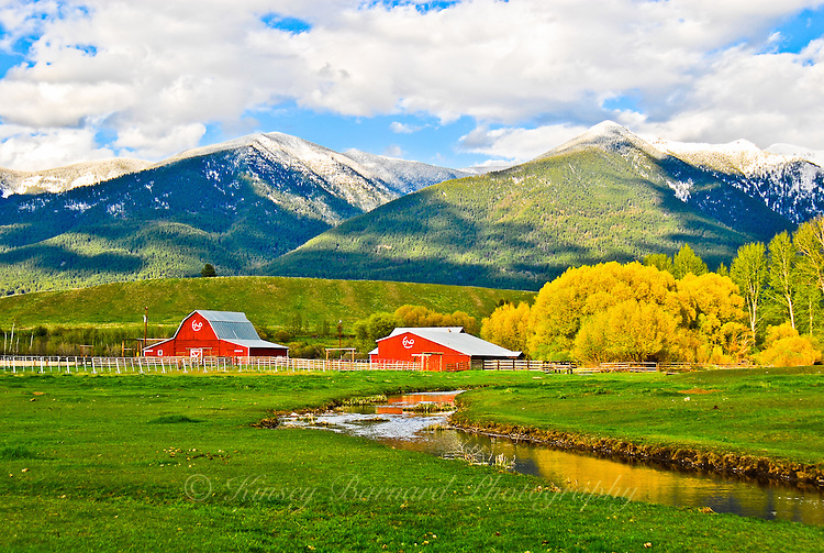 The red barns of the 69 Ranch are set off by the snow capped forest behind it. Billow white clouds sail in a the ever beautiful Montana Big Sky. Indian Creek meanders in the foreground.