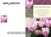 Alfredo, FLOWERS, BLUMEN, FLORES,  photos+++++,BRTOXX02730,#F#