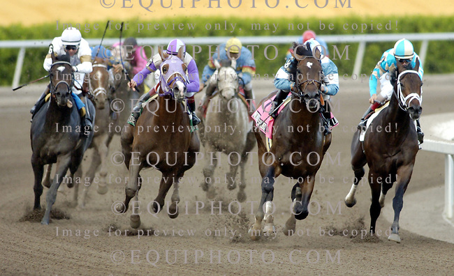 Nobiz Like Shobiz, #8, second from right, rounds the turn with Cornelio Velasquez riding rounds the turn the $150,000 Holy Bull Stakes at Gulfstream Park. Photo By Matt Dean/EQUI-PHOTO