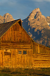 Old wooden barn and mountains in morning light, along Mormon Row, Grand Teton National Park, Wyoming
