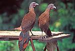 Birds - Tobago