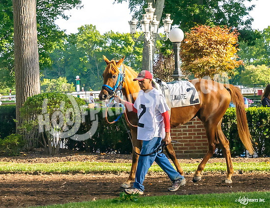 Risky Red before The Arabian Juvenile Championship (grade 3) at Delaware Park on 9/24/16