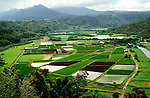 Hawaii: Kauai, Hanalei Valley Overlook and taro fields.  Photo hifree105.Photo copyright Lee Foster, 510/549-2202, lee@fostertravel.com, www.fostertravel.com