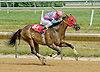 Halo Hollie winning at Delaware Park on 7/11/12