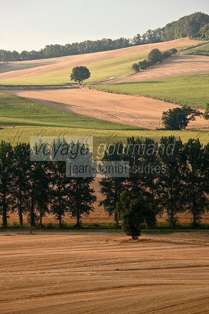 Europe/France/Midi-Pyrénées/32/Gers/env Mas-d'Auvignon:  Paysage agricole