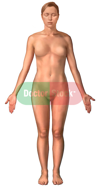 This full color medical illustration pictures the primary surface anatomy of the female body shown from a anterior view. It features a single full standing white female figure from the left side with arms to the side and palms facing forward in a standard anatomical position.