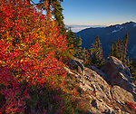 Mount Baker-Snoqualmie National Forest, WA: A huckleberry bush in fall color with a view of the North Cascades from Artists Ridge Trail