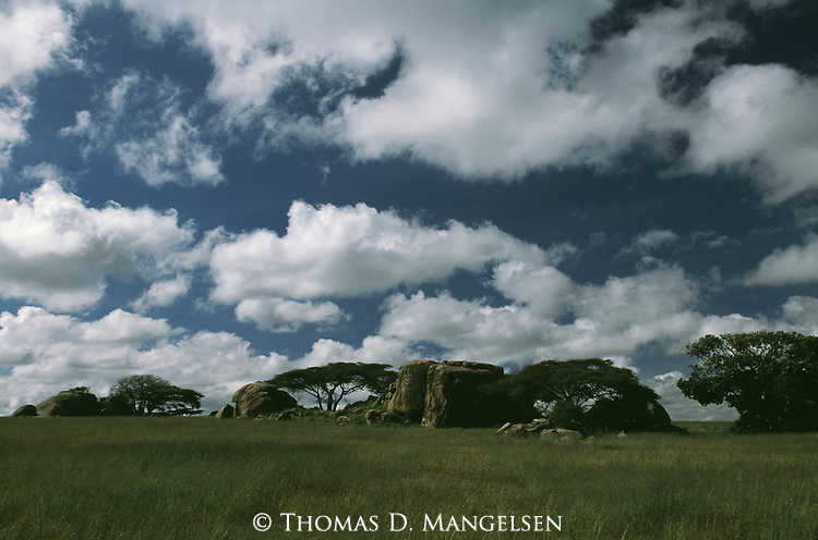 Acacias and boulders on the plains of Serengeti National Park, Tanzania.