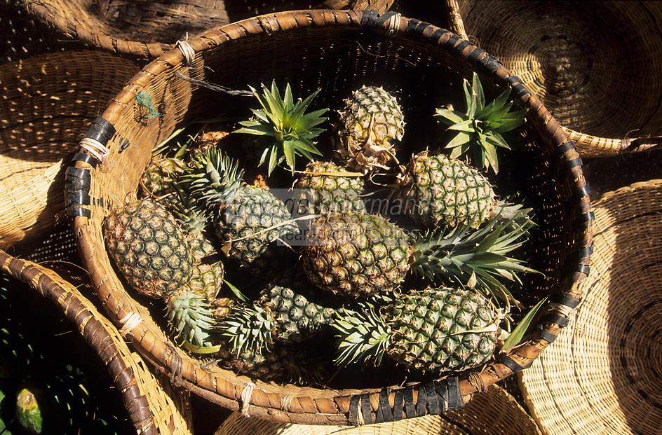 Afrique/Afrique de l'Ouest/Sénégal/Parc National de Basse-Casamance/Cap Skirring : Panier d'ananas