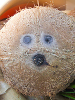 A close-up of an all-natural coconut face, Hawai'i.
