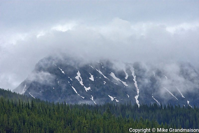 Trees in fog and rain. Monashee Mountains, Nancy Green Provincial Park, British Columbia, Canada
