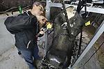 Foto: VidiPhoto<br /> <br /> OUDERKERK A/D IJSSEL &ndash; Cowfitter Egbert Puttenstein doet woensdag zijn uiterste best om van zes koeien van melkveehouder Marco Verdoold uit Ouderkerk a/d IJssel, topmodellen te maken. Zaterdag wordt de zogenoemde Wintershow gehouden in Noordeloos en daar moet het vee van Verdoold er piekfijn uitzien. Vandaar dat een van de twee enige professionele toiletteurs van Nederland is ingehuurd. De koeiencompetitie in Noordeloos staat bekend als de beste van Nederland. Landelijke winnaars komen vaak uit de Alblasserwaard. Een &ldquo;make over&rdquo; voor koeien kost veel tijd en dat heeft Verdoold niet. Bovendien kan hij zich niet meten met een professional op dit gebied. Daarom wordt de Zwolse cowfitter ingehuurd. Voor Puttenstein is het dagelijks werk, naast dat hij ook cursussen geeft aan amateur-toiletteurs. Het geheim voor een topfitte koe is -naast een perfecte was- en scheerbeurt, wat haarlak en bijkleuren- rust, reinheid en regelmaat. En een scheutje 7-Up in het water, om te voorkomen dat het water op locatie anders smaakt dan thuis. Een volle buik en bijna volle uiers zijn belangrijk tijdens de show. Verdoold doet al tientallen jaren mee met melkveeshows en valt regelmatig in de prijzen.
