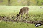 misc deer