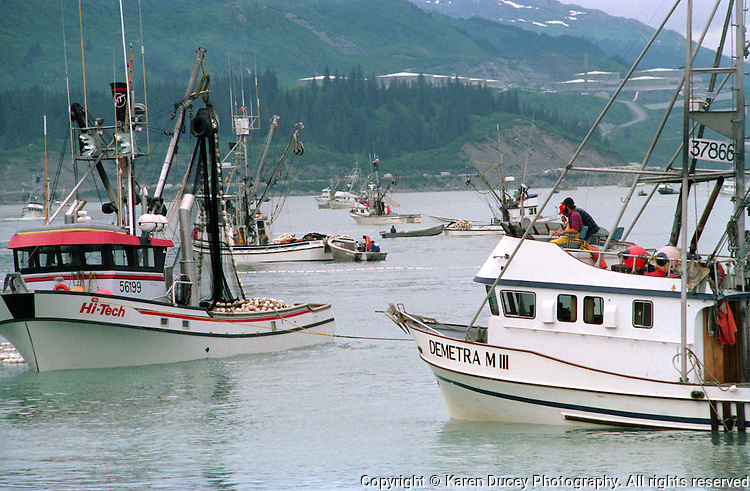 Prince William Sound, Alaska: A salmon seiner opening outside the Solomon Gulch Hatchery outside Valdez, Alaska in 1989. The Valdez Marine Terminal, an oil port at the southern end of the Alaska Pipeline, is seen in the background. The terminal was the point of departure for the Exxon Valdez just prior to the Exxon Valdez oil spill that happened that same year.