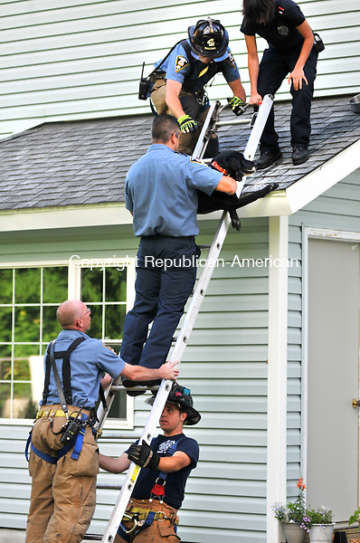 TORRINGTON, CT - 05 JUNE 2014 -- Torrington Firefighters from Engine 4 rescue Nikki, a 9-year-old black Labrador who stranded herself on roof on Hill Street Thursday, the day after she was adopted from the local pound. Alec Johnson/ Republican-American