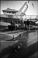 Europe/France/Provence-Alpes-Côte d'Azur/13/Bouches-du-Rhône/Marseille: Port de pêche de Saumaty, les chats surveillent le déchargement des bateaux de pêche