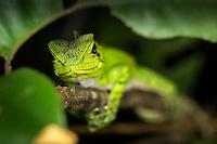 Ecuador reptiles