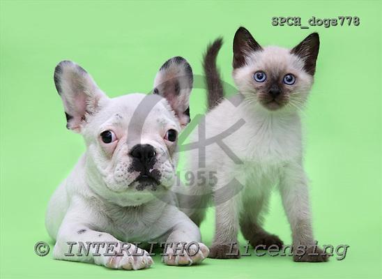 Xavier, ANIMALS, dogs, photos, SPCHdogs778,#A#