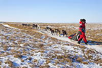 Lance Mackey on snowless tundra just up from the Unalakleet river nearing Unalakleet