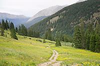 Meadow of Aspen Sunflowers