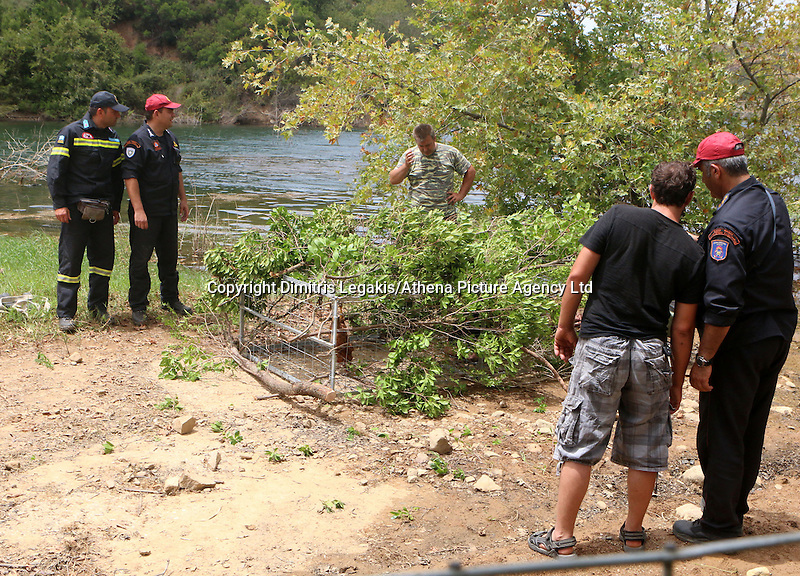 """Rethymnon, Greece. Friday 11 July 2014<br /> Pictured: Members of the emergency services with the cage-like trap and chicken as bait which they installed to capture the crocodile at the man-made Potamon lake and dam near the town of Rethymnon in Crete, Greece. <br /> Re: A Greek reptile expert on Friday began an operation to trap a two-metre long crocodile that mysteriously appeared in a man-made lake and dam on the tourist island of Crete last weekend.<br /> """"We are placing our hopes on the crocodile's hunger,"""" herpetologist Petros Liberakis, who works at the island's natural history museum, told Skai TV.<br /> """"The operation could take two days, or a couple of weeks, or it could fail altogether,"""" he said.<br /> Cages laden with meat will be placed near the artificial dam, some 15 kilometres (9.3 miles) from the city of Rethymno.<br /> Crews had previously fenced off a one-kilometre stretch of coast around the lake to keep curious visitors away."""