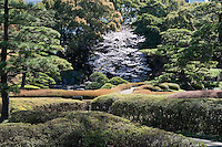 A view across the clipped azalea bushes and flowering cherry blossom in Ninomaru (the Second Citadel) at Higashi-Gyoen, the East Gardens of the Imperial Palace