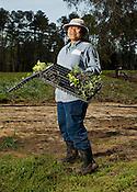 Pot Hsu.Burma.Tomatoes, Mustard Greens and Cabbage. ..Transplanting Traditions Community Farm CSA, Orange County, March 30, 2012.
