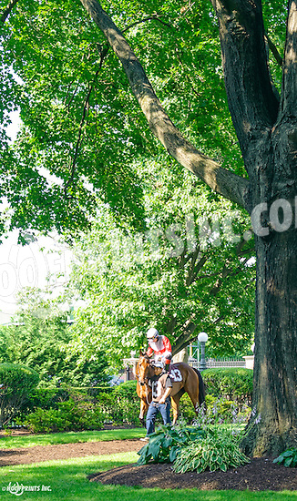 My Impression before The Christiana Stakes at Delaware Park on 7/6/16