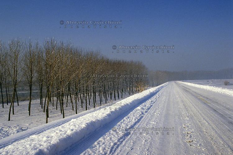 San Benedetto Po (Mantova), paesaggio della campagna d'inverno. Pioppeto con neve.<br /> San Benedetto Po (Mantua), countryside landscape in winter. Poplar grove.