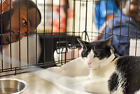 MANHATTAN ,NEW YORK, USA -JUNE 02:  Potential adopters at Best Friends Pet Super Adoption that held its annual adoption event bringing together more than twenty pet rescue organizations  and hundreds of dogs and cats into contact with people seeking to open their hearts & homes to an animal in need on June 2, 2017 in New York. Joana Toro/VIEW press