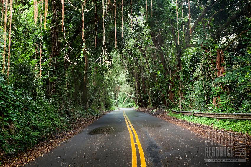 A canopy of trees with hanging vines over Nu'uanu Pali Drive, Honolulu, O'ahu.