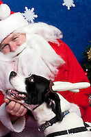 Snoopy poses for a holiday photo with Santa at Pet Pros in Redmond, WA to help raise money for Dogs Deserve Better on December 11, 2010. (photo by Karen Ducey)