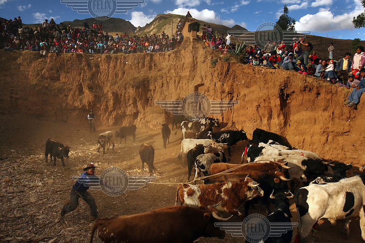 A man rounds up bulls in a bullring at the Yawar Fiesta in Coyllurqui in the Peruvian Andes on Independence Day.