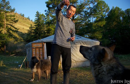 Orlan, 35, plays with his dogs in front of his yurt in the taiga in Tuva Republic, Russia. Orlan ((Tuvans normally use just one name) owns about 50 sheep, goats and milking cows. Like many other animal herders in the republic, Orlan prefers traditional farming methods but finds it difficult to compete in modern society.