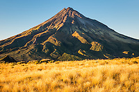 Alpine fields of tussock with Taranaki, Mt. Egmont in background, Taranaki Region, Egmont National Park, North Island, New Zealand, NZ