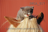 Carl, ANIMALS, photos(SWLA617,#A#) Katzen, gatos