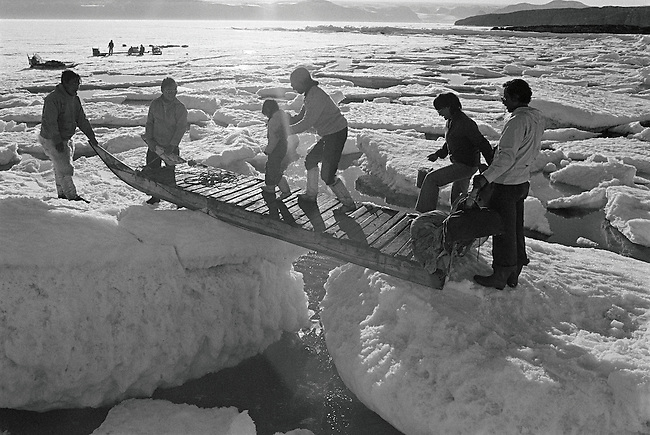 Inuit family use a sled as a bridge to cross a deep gap between ice floes. Qeqertat. Northwest Greenland.