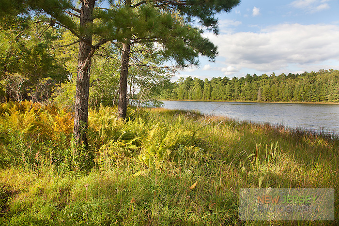 Batsto River & Pine Barren Forest, Wharton State Forest, New Jersey