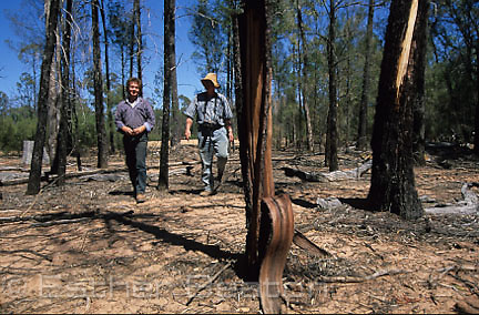 Biologist and writer walking through Pilliga State Forest. Trees dying from overspill from Bohena Bore, New South Wales
