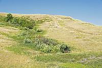 rangeland<br /> near Big Beaver<br /> Saskatchewan<br /> Canada