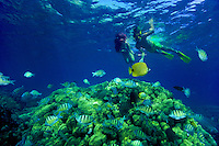 Couple snorkeling w/ colorful reef fish