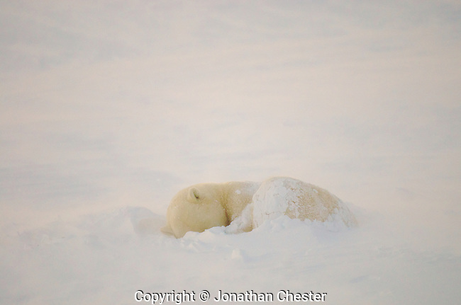 Cape CHurchill Manitoba