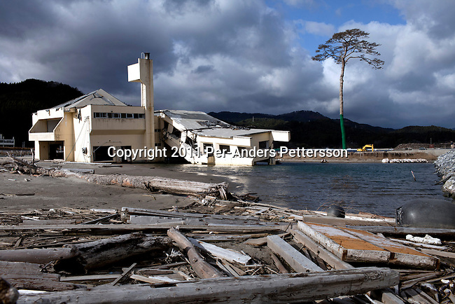 RIKUZENTAKATA, JAPAN - DECEMBER 4: A lone pine tree estimated to be 260 years old which survived the tsunami stands on December 4, 2011, in Rikuzentakata, Japan. The area had an estimated 70,000 trees and they all perished when the Tsunami moved in. The small city was almost wiped off the map during the Tsunami as the tsunami shelters were designed to for a wave of three to four meters height, but the tsunami created a 13 meters high wave and most of the town was flattened. Northeastern Japan's coastline was struck by an earthquake measuring 9.0 on the Richter scale and a Tsunami on March 11, 2011 which destroyed villages and livelihoods for hundreds of thousands of people. Almost 16,000 dead, thousands missing, more than 700,000 properties destroyed and an estimated 387,000 survivors lost their homes. Its estimated that it will take more than five years to rebuild. The cost is estimated to 309 billion U.S. dollars, the world's most expensive natural disaster. Many children suffered especially with school destroyed, education interrupted and the loss of family members took a heavy toll. (Photo by Per-Anders Pettersson)