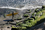 Surfer in Capitola