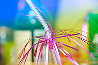 Decorated straw from a glass (Food and Drink Photography)